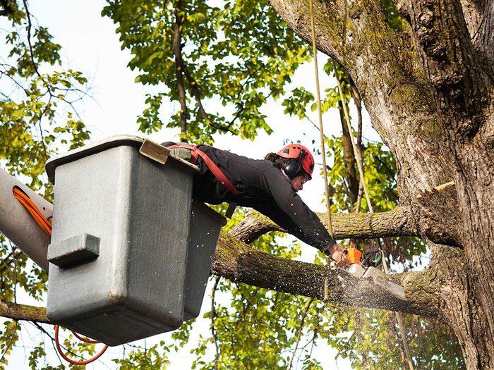 Entretien de la maison: surveillez vos arbres et votre aménagement paysager.
