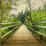 Marcher dans les bois: la nature sauvage du Canada en images